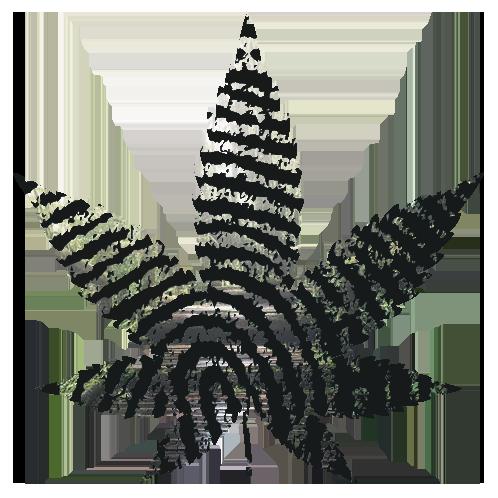 pura vida organic hemp leaf logo